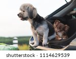 adorable and happy mixed breed... | Shutterstock . vector #1114629539