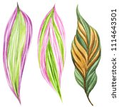 tropical leaves. watercolor... | Shutterstock . vector #1114643501