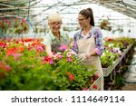 portrait of senior and young... | Shutterstock . vector #1114649114