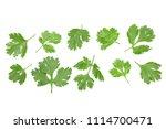 cilantro or coriander leaves... | Shutterstock . vector #1114700471