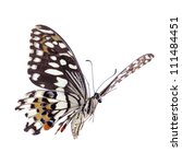 Stock photo flying citrus swallowtail lime butterfly papilio demoleus isolated on white 111484451