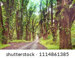 dirt road in remote jungle in... | Shutterstock . vector #1114861385