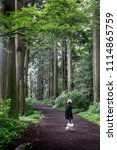 japan forest in summer season ...   Shutterstock . vector #1114865759