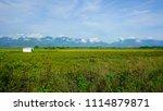 beautiful green field with... | Shutterstock . vector #1114879871