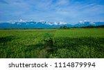 beautiful fresh green field... | Shutterstock . vector #1114879994