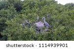 the heron sits in a nest with... | Shutterstock . vector #1114939901