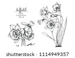 sketch floral botany collection.... | Shutterstock .eps vector #1114949357