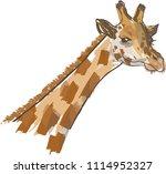 vector painting of giraffe.   Shutterstock .eps vector #1114952327