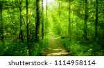 beautiful green forest.  forest ... | Shutterstock . vector #1114958114