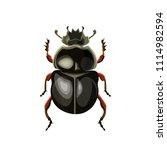 sacred scarab beetle. vector... | Shutterstock .eps vector #1114982594