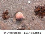 part of a single seashell on... | Shutterstock . vector #1114982861