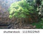 one single tree by waterfall... | Shutterstock . vector #1115022965
