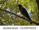 Small photo of A Crow is a bird of the genus Corvus.