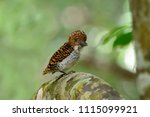 baby bird  lovely beautiful... | Shutterstock . vector #1115099921