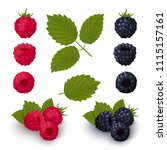ripe red raspberries and... | Shutterstock .eps vector #1115157161