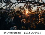 apple tree branch in spring... | Shutterstock . vector #1115204417