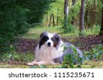 Dog On Wooded Trail