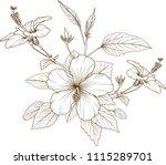 hibiscus flowers vector by hand ... | Shutterstock .eps vector #1115289701