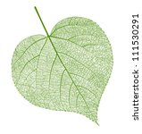vector leaf isolated | Shutterstock .eps vector #111530291
