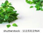 bunch of mint closeup.... | Shutterstock . vector #1115311964