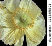 floral fine art still life... | Shutterstock . vector #1115358521