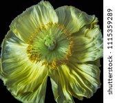 floral fine art still life... | Shutterstock . vector #1115359289