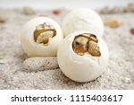 cute portrait of baby tortoise... | Shutterstock . vector #1115403617