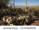 loma verde trail cactus  ... | Shutterstock . vector #1115464034