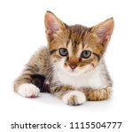Stock photo small brown kitten isolated on white background 1115504777