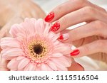 well manicured female hand and... | Shutterstock . vector #1115516504
