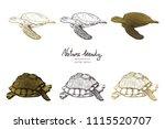 vector illustration. pen style... | Shutterstock .eps vector #1115520707