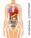 vector illustration eps10... | Shutterstock .eps vector #1115527469