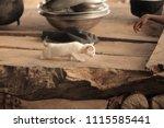 adorable animals   photo of a... | Shutterstock . vector #1115585441