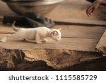 adorable animals   photo of a... | Shutterstock . vector #1115585729