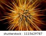 arizona desert cactus | Shutterstock . vector #1115629787