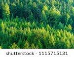 green forest of fir and pine... | Shutterstock . vector #1115715131