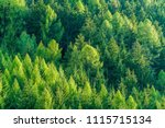 Green Forest Of Fir And Pine...
