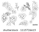 a collection of jasmine... | Shutterstock .eps vector #1115726615