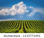 Growing Vineyard Agricultural Field Cloudy - Fine Art prints
