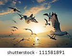 Seagull With Sunset In The...