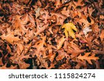 autumn fall leaves | Shutterstock . vector #1115824274