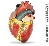 human heart plastic model... | Shutterstock . vector #1115851019