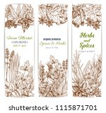 herbs and spices. vector... | Shutterstock .eps vector #1115871701