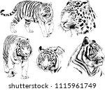 vector drawings sketches... | Shutterstock .eps vector #1115961749