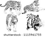 vector drawings sketches... | Shutterstock .eps vector #1115961755