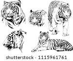 vector drawings sketches... | Shutterstock .eps vector #1115961761