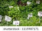 crates of fresh organic...   Shutterstock . vector #1115987171