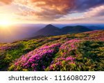 mountains during flowers... | Shutterstock . vector #1116080279