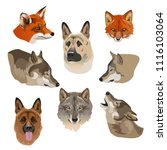 portraits of wolves  foxes and... | Shutterstock .eps vector #1116103064
