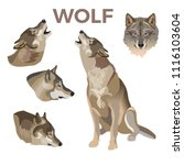 Gray Wolves Set. Vector...